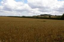 wheat-700-700x336
