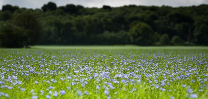 EAMU granted for Integral® Pro for use on Linseed