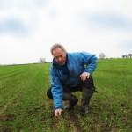 Barrie Hawkin in manganese deficient winter wheat crop 700