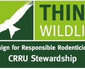 2016 sees no increase in barn owl rodenticide residues