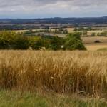 barley by jn 700