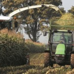 maizeharvest hainey grainseed 100517 700