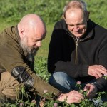 IBERS scientists Dr Leif Skøt (right) and Dr David Lloyd, studying red clover