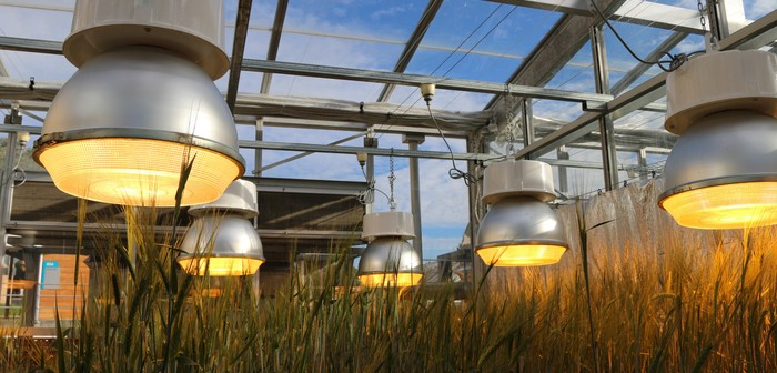 Speed breeding greenhouse: Image courtesy of the University of Queensland