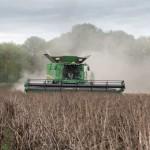 Harvesting a crop of Fuego beans credit Tim Scrivener.JPG
