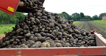 Red Tractor potatoes