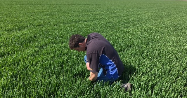 Seed competition winner sets sights on realising wheat crop potential