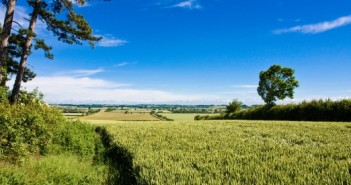 Apply for grants to help wildlife thrive on your farmland Countryside Stewardship: Simplified Offers