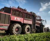 EU levy refund secured for British beet sugar industry