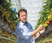 Agrovista renews three-year sponsorship agreement with the National Fruit Show