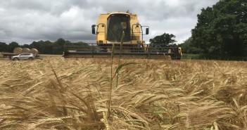 Harvest 15 June 2018