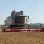Winter wheat harvest Lucas July 7 2018 (3)