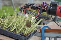 GrowBot project
