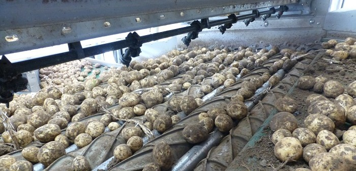 Potatoes On The Evolution