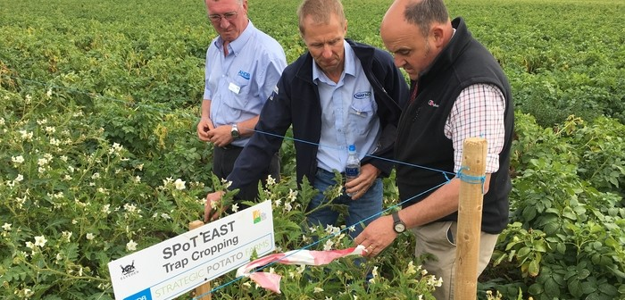 Drought 2018 still posing questions to potato growers