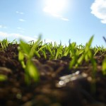 Poor soil health means that a lot of growers aren't getting the most out of their fertiliser applications