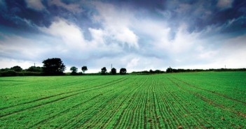 Soil-borne diseases such as take-all remain a major threat to profitability of second cereals, reducing yields by up to 30 percent - 01