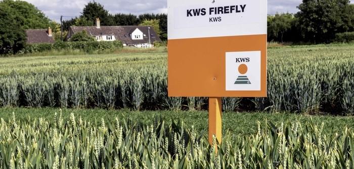 KWS Firefly