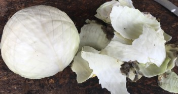 Serenade treated cabbage