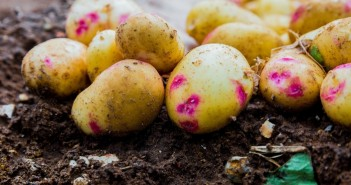 IMAGE two new studies confirm potatoes are a healthy option