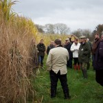 Miscanthus farm walk