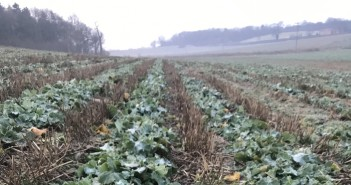 Spring agronomy advice to help OSR fulfil yield potential