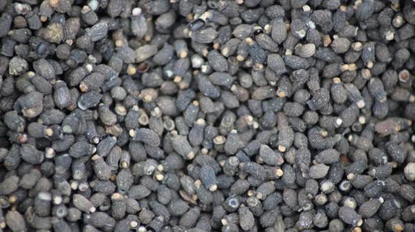 Seeds 005