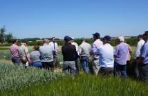 Growers visit Hutchinsons Little Ponton trials site