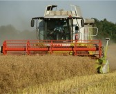 Mixed oilseed rape yields reported as growers plan to beat the beetle