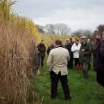 Miscanthus farm walk