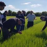 Barley at Tim Lamymans YEN