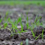 Backward crop