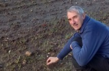 Peter Kettlewell checks rooting in waterlogged wheat