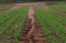 Tramline erosion Credit Dr Pia Benaud