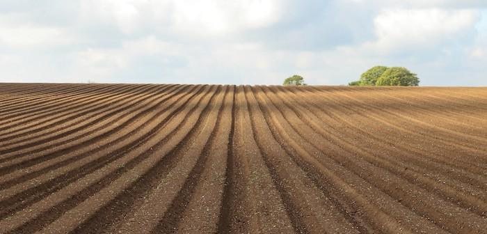 Potato ridges- pre emergence of crop