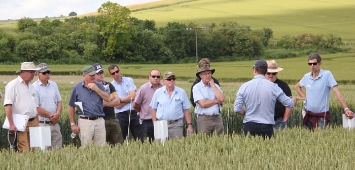 Examining wheat varieties at AgriiFocus