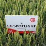 LG Spotlight (4)
