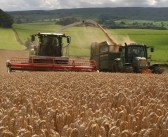 Alkalise whole cereal crops this harvest  to complement and bolster multi-cut grass silage yields