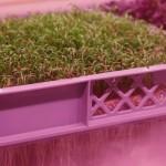 LettUs Grow aeroponic herbs