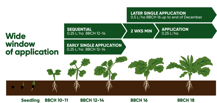 OSR Growth stage vector