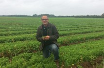 Veg agronomist Ashley Cooley