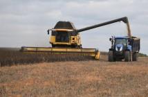 PGRO Bean harvest 3