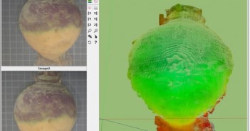 3D imaging of a swede before trimming
