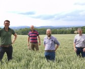 Could blending wheat varieties help reduce risk on your farm?