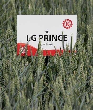 LG Prince