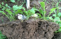 Healthy Soils promoting root structure and organic matter