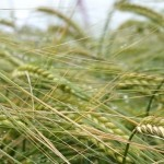 LG Diablo gains full approval for malting and brewing