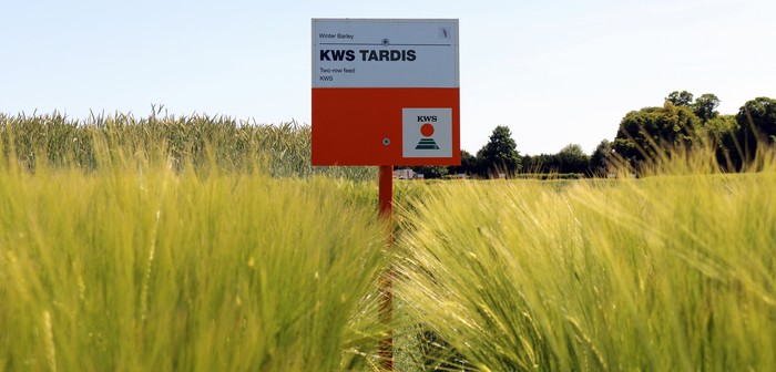 KWS Tardis takes top slot for 2-row Winter Barley in 2021/22 AHDB Recommended List