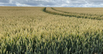 Fertiliser programme key to award winning crop yields