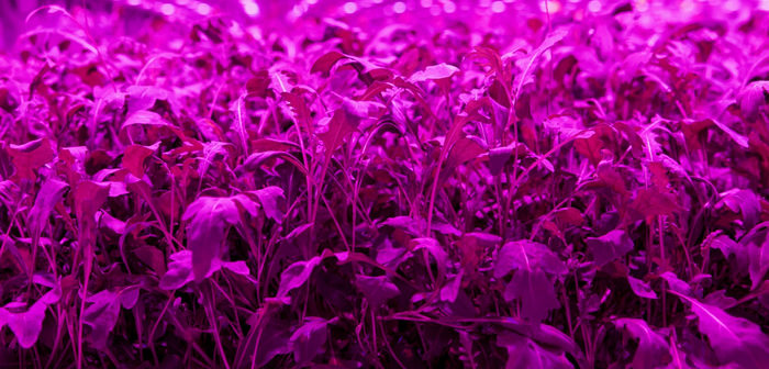 Light Science Technologies wins Innovate UK funding to develop ground-breaking sensor technology for vertical farming